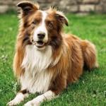 Bezpłatne chipowanie psów