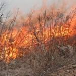 Wypalanie traw jest łamaniem prawa!