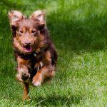 Mieszkańcy gminy Brwinów mogą skorzystać z bezpłatnego czipowania psów