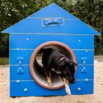 W Pruszkowie czynny jest już plac zabaw dla psów