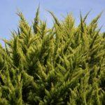 Jeszcze więcej zieleni przybędzie na terenie gminy Nadarzyn