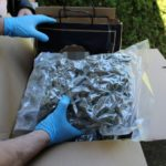25 kilogramów marihuany na balkonie