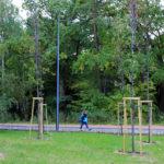 Nowe drzewa w Piasecznie