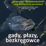 Żaby, płazy i raki w JPEGu.