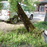 W Komorowie wycinają drzewa