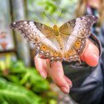 Motyle na Ursynowie